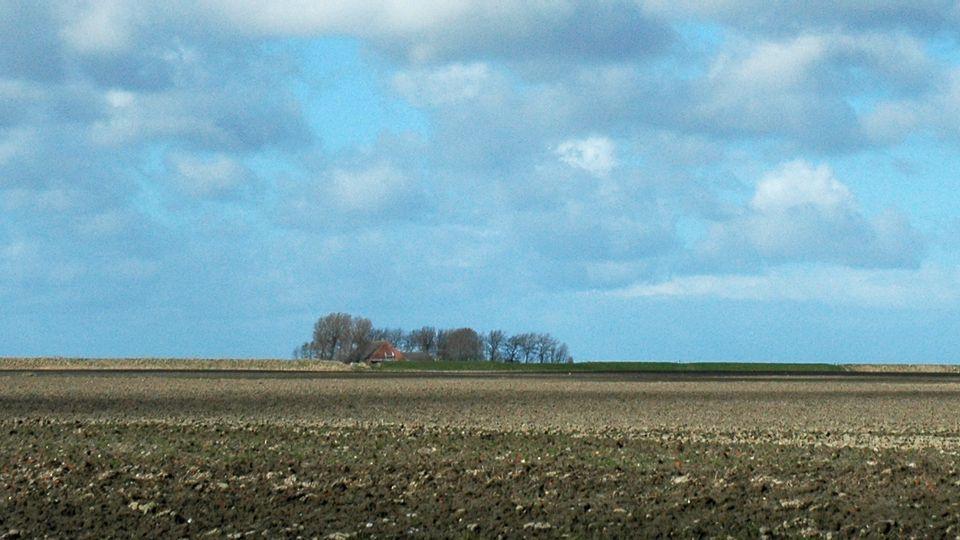 grootschalige-openheid-dijkenlandschappolder-usquert4677-4