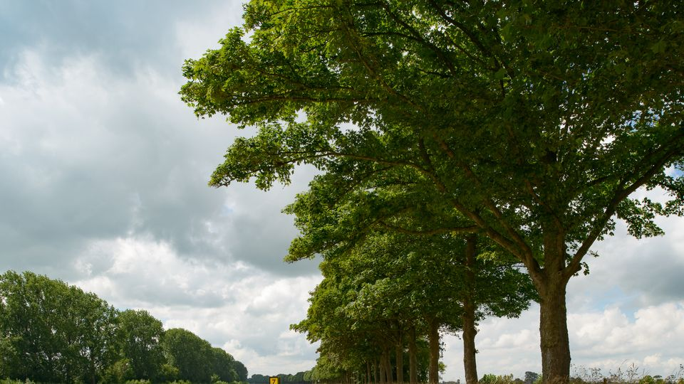 bomenrij-water-zuidhorn